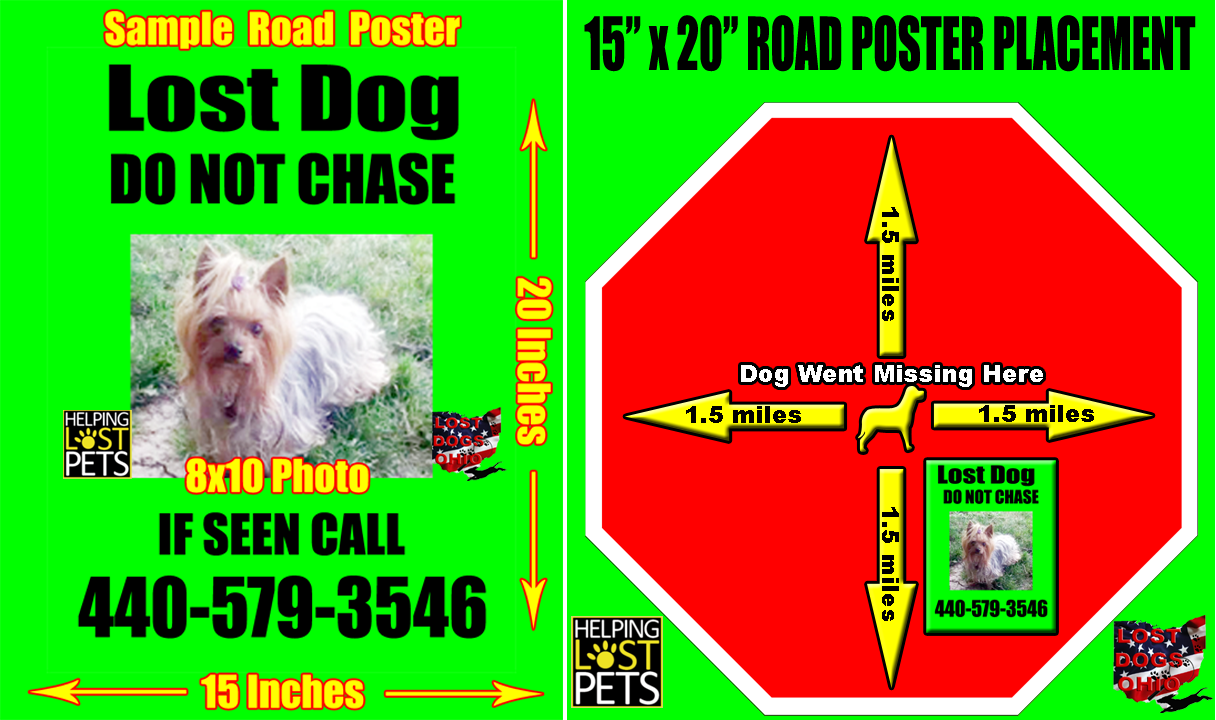 lost dog poster template – Lost Dog Poster Template